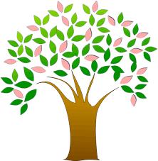 arbre à soucis